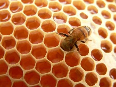 Abelha depositando mel na colmeia