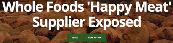 """Título de matéria da PETA sobre investigação de crueldades em fazendas fornecedoras de empresa alimentícia que dizia ter adotado """"carne feliz"""". Saiba por que não é uma boa ideia usar denúncias como essa como """"provas"""" de que o bem-estarismo é uma farsa para os animais"""