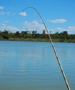 """Um """"veganismo"""" que aceita matar animais por meio da pesca para fins de """"comunhão com a Natureza"""": um atleta tentou defender isso recentemente"""