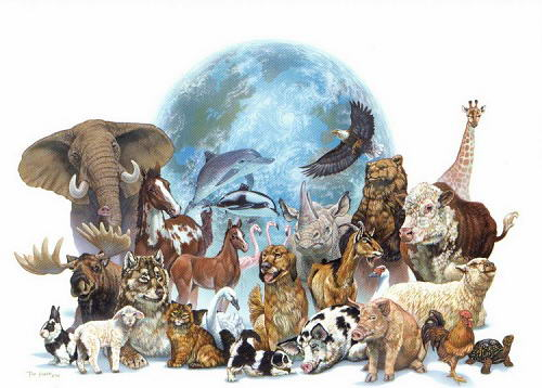 animais-liberdade-justica-veganismo