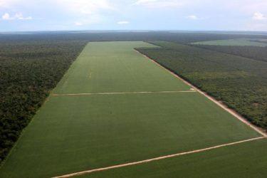 Latifúndio de soja, um dos problemas da má produção e distribuição de alimentos no mundo. O veganismo sozinho não vai eliminar esse problema
