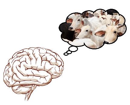 Cérebro pensando nos animais explorados pela pecuária