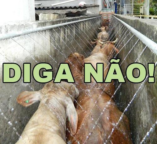 Diga não ao abate de animais