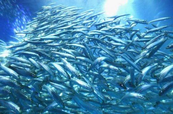 Mar com muitos peixes