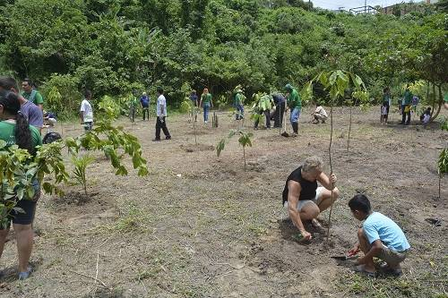 Reflorestamento em Manaus