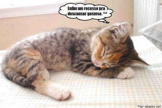 Gatinho dormindo em recesso