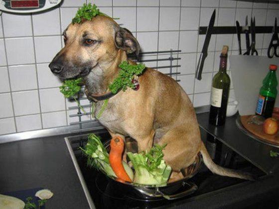 Cachorro no fogão, carne de cachorro