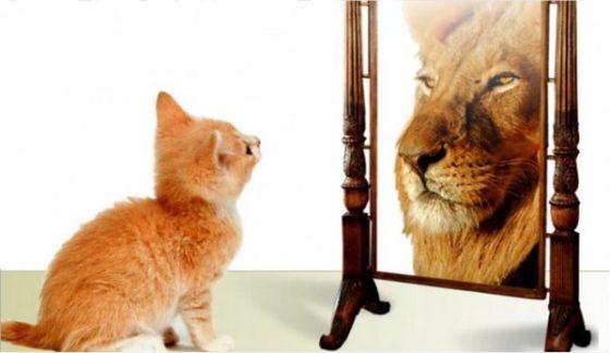 Gatinho se vendo como leão no espelho