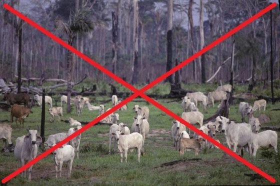 Desmatamento e pecuária nunca mais