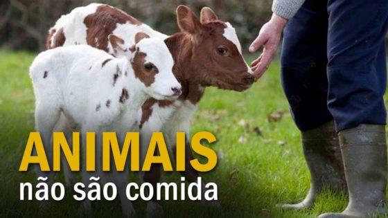 Animais não são comida