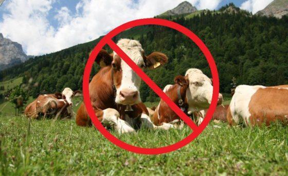Vegetarianos não são bem-estaristas