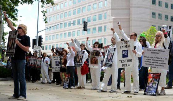 Protesto contra pesquisas em animais