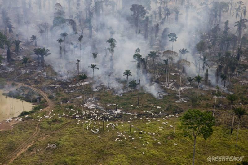 Desmatamento amazônico e pecuária