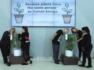 Pseudociência, sentidos das plantas