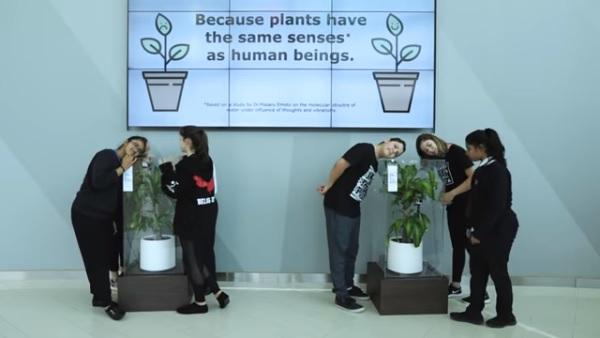 Pseudociência, bullying em plantas