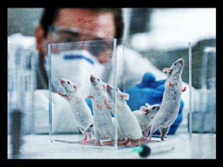 Experimentação animal, uma prática de especismo