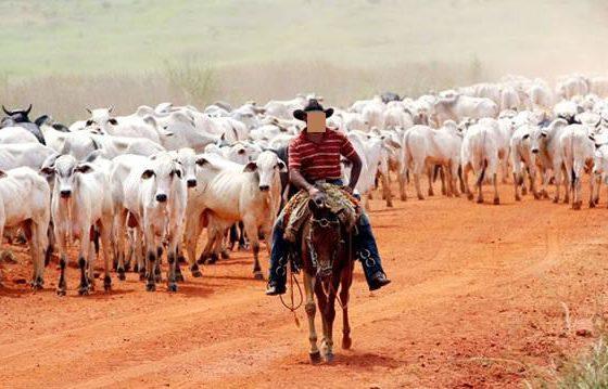 Pecuária, violação dos Direitos Animais