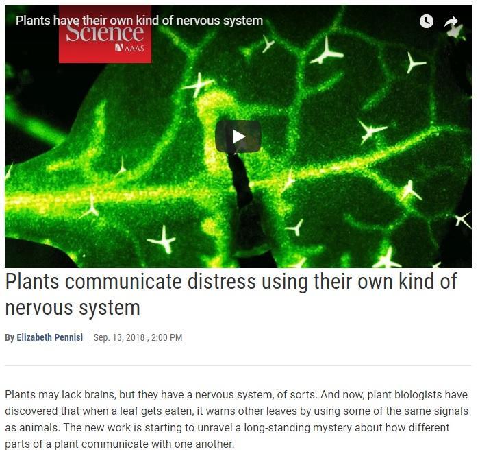 Trecho de matéria da Science sobre comunicação química entre órgãos de planta: plantas sentem dor?