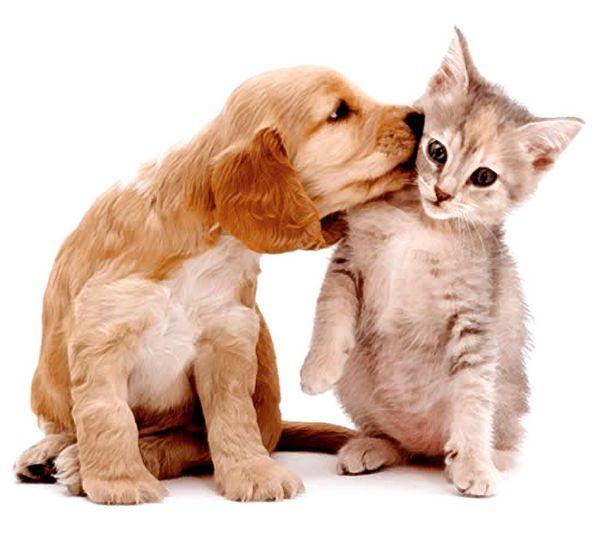 Você já defende cães e gatos?